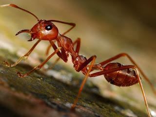 Kamperen zonder mieren in je tent